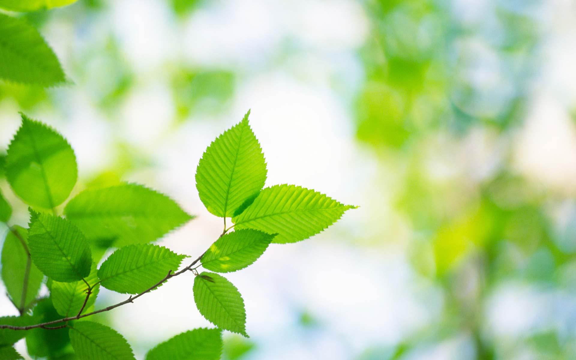 sld-fresh-leaves2